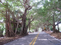 Banyan tree-shaded SE St Lucie Blvd, where it meets Bent Banyan Way, just north of the park.