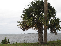 View across the Indian River.