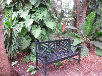Bench and giant leaves.