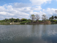 Baobab trees across the lake.