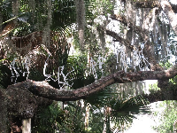 Longfellows by Frabel and Spanish moss- two of the most delightful things in the world!