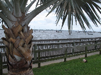 Palm and riverfront.
