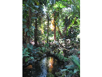 Stream in the tropical area.