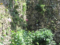 Grotto wall covered in butterflies.