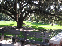 Moss-draped oak tree and benches.