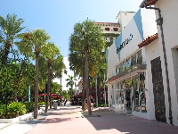 Marciano store and palms.