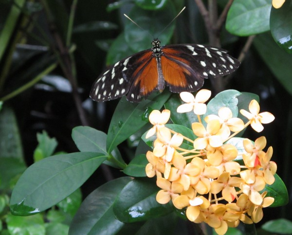The butterflies are very much up close at the rainforest area!