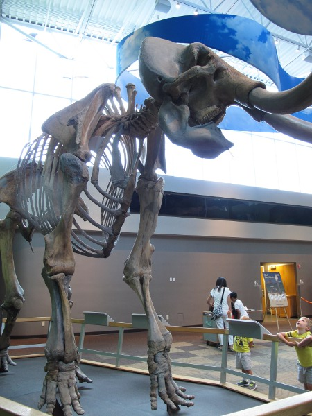 A boy looks up in awe at a prehistoric animal.