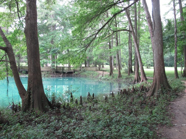 Blue Hole Spring, Florida Caverns State Park, North Florida FL