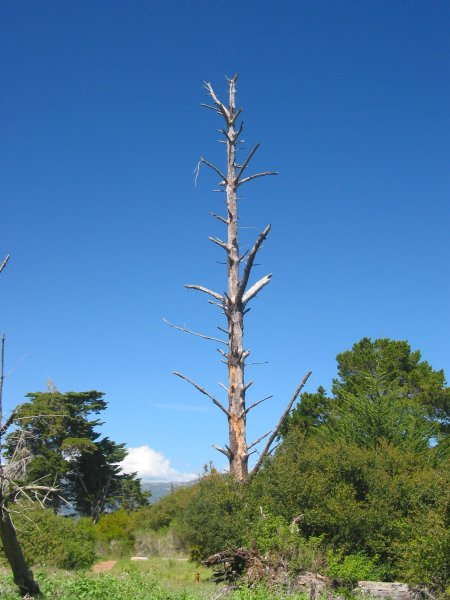 There are totem-pole dead trees at Douglas Preserve.