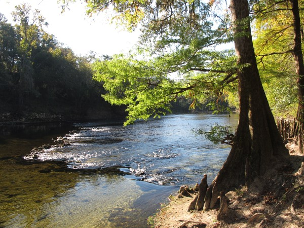 Pretty light at the river beach, where the spring leads into the Withlacoochee River.