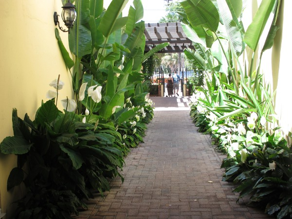Pretty alley with white anthuriums.