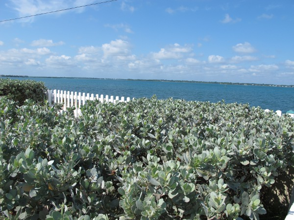 Silvery shrub and intracoastal waterway.