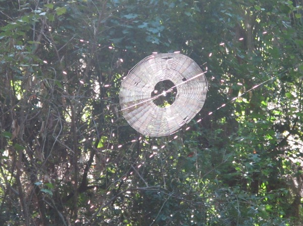 Giant thick spiderweb!