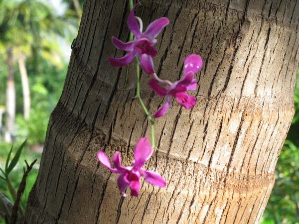 Coconut tree and orchids.