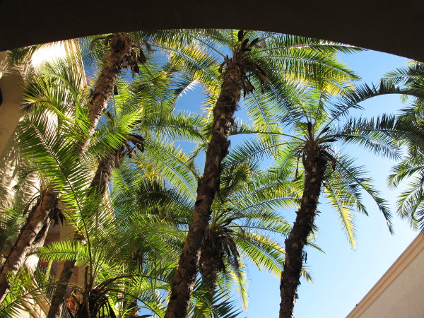 Arches look into the inner courtyard of the House of Hospitality and its palms.