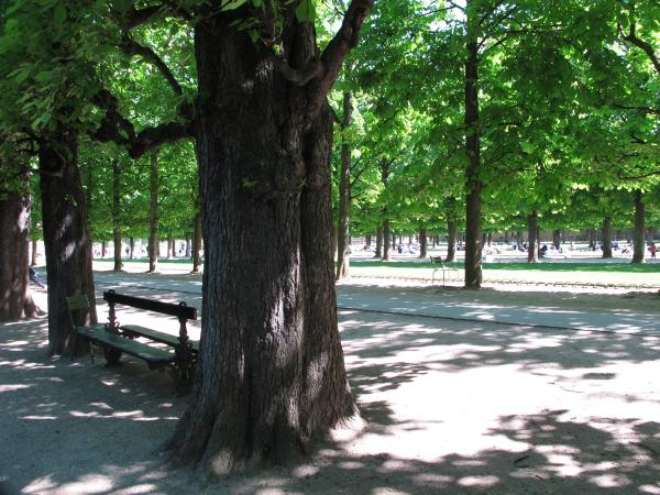 I love the rows of chestnut trees and benches!