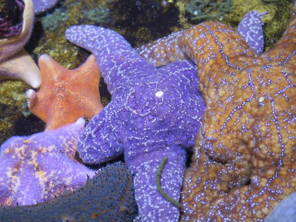 The colorful starfish are beautiful.