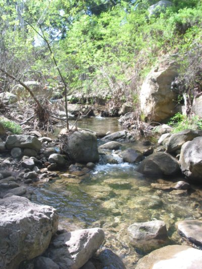 The stream you cross before heading deeper into San Roque Canyon.