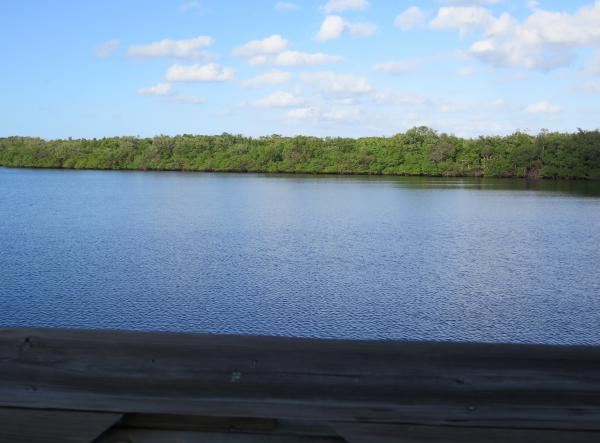 Looking out over the peaceful estuary. There are so many different things to see at John D. MacArthur Beach!