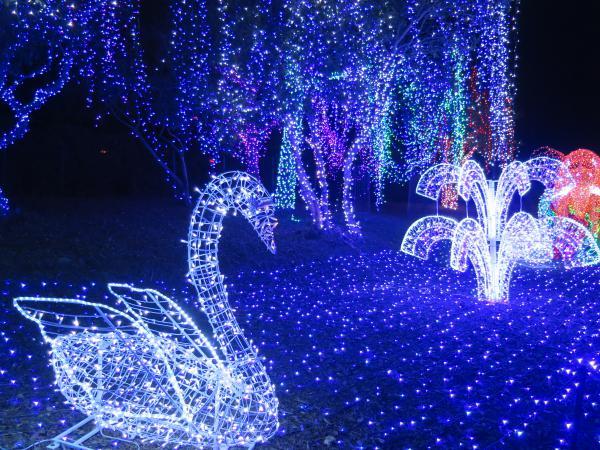 Cambria Pines Lodge Christmas Lights