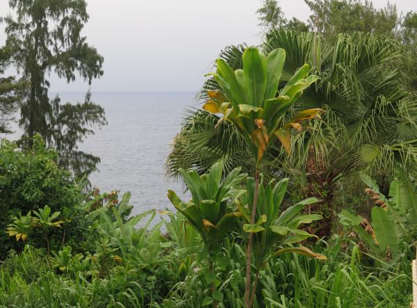 The view of tropical vegetation and the sea!