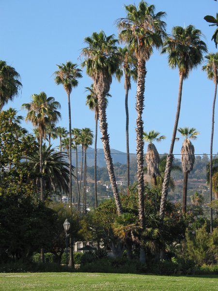 I love the tall palms in Alice Keck Park Gardens!