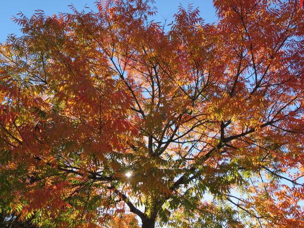 Orange autumn tree!