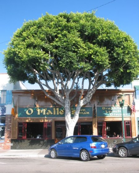 O'Malley's Restaurant, and the nice trees on Main Street.