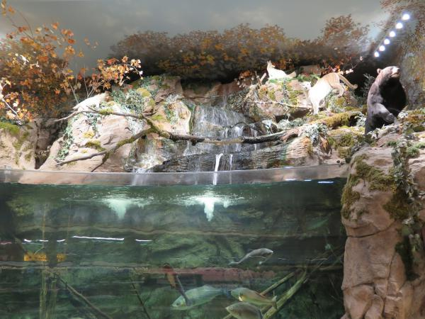 Bass Pro Shop, Cary, North Carolina NC