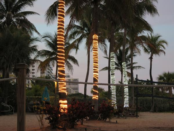 Lights around the palm trees.