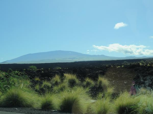 Plants catching the light, lava rock, and volcano in the distance, on Highway 19 along the Kohala Coast.