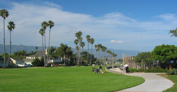 Rows of palms, blue sky, green grass- Shoreline Park is full of color!