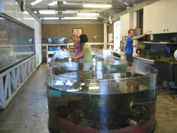 The touch tanks at The Reef, open 11-2 on Saturdays, for free!
