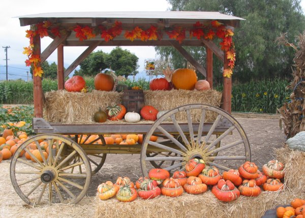 Decorated pumpkin cart.