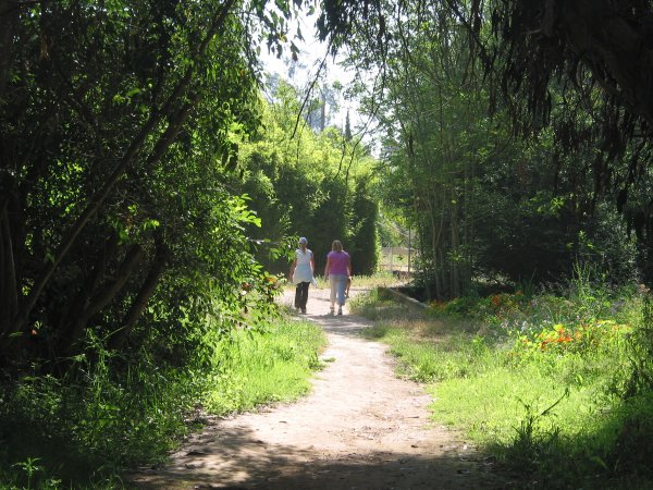 Friends taking a morning walk in the forest that surrounds the butterfly grove.