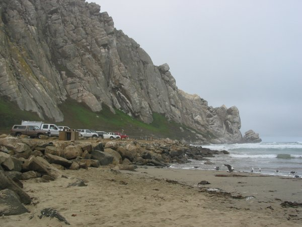 The beach, seagulls, parking lot, and Morro Rock.