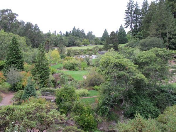 Tilden Park Botanic Garden, Berkeley, San Francisco California