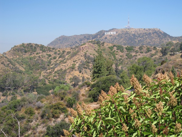 Hollywood sign, as seen from East Observatory Rd.