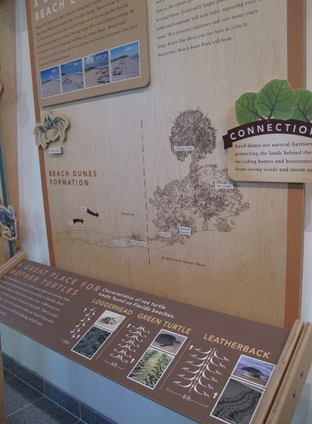 Information board about turtle tracks.