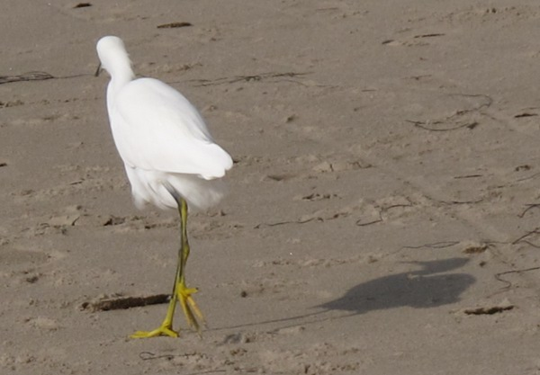 Cutest bird with funny feet at Hendry's Beach.