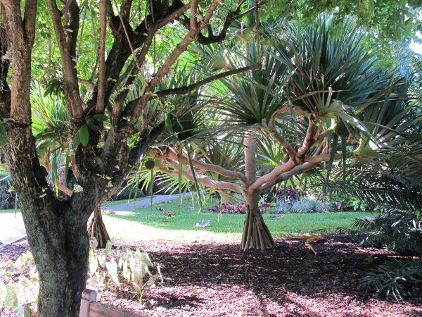 Mounts Botanical Garden West Palm Beach Fl