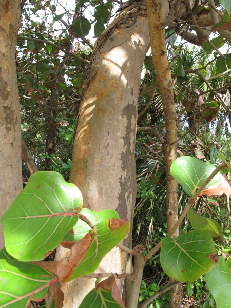 Tropical tree near the parking lot.