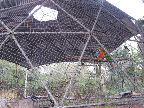 The parrot in its geodesic dome.
