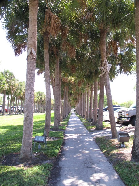 Row of palms in parking lot.