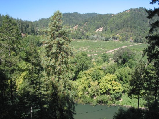 View over the Russian River, with champagne vineyards and redwood forests in the background.